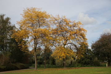 yellow leaves on ground and tree at the Bückeburgpark in Nieuwerkerk aan den IJssel