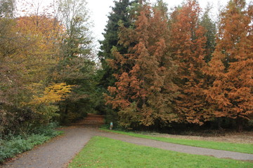 Yellow, orange, brown and red leaves in the Kralingse Bos Rotterdam in the Netherlands during autumn of 2018 in the Netherlands