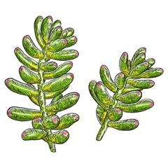 Hand drawn wild tropical house Succulent plant. Scandinavian mood element for card design. Air plant for terrarium. Vector.