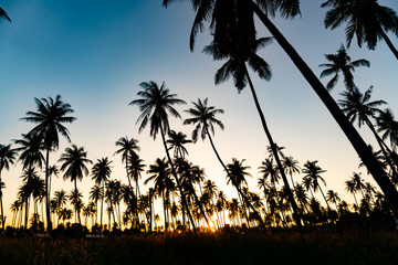 Silhouette coconut palm trees with sunset.