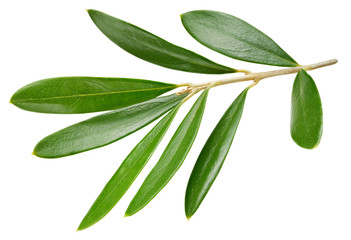 Olive leaves isolated on white
