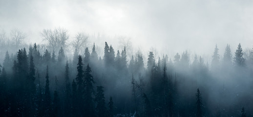 Boreal Forest Fog - Canadian Forest Panorama