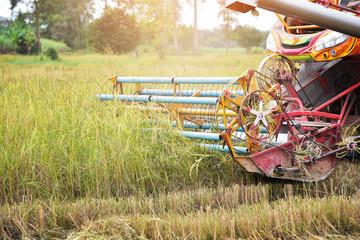 Combine Harvesting Harvesting Large (Rice) Harvest