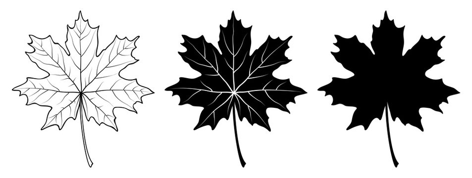 Maple leaf. Linear, silhouette isolated on white background. Vector illustration