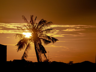 Silhouette of coconut palm trees on colorful sunset tropical city