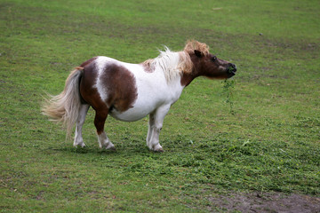 Pony is a small horse, for children to learn to ride a horse.