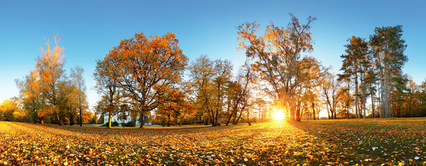 Autumn park with sun and forest - Panorama
