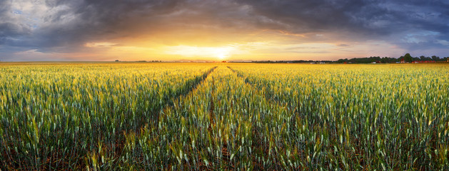 Fototapete - Landscape with wheat field, agriculture - panorama