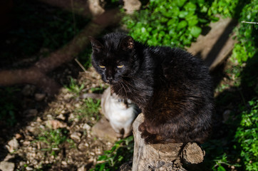 Photograph of two cats, one black and one white defocused background. The black cat is on top of a trunk.