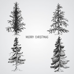 Pine trees. Christmas trees realistic hand drawn vector set, isolated over white