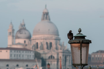 A pigeon sitting on a street lamp against the background of the Cathedral of Santa Maria Della Salute