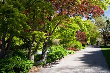 Walking through the Christchurch Botanical Gardens in New Zealand