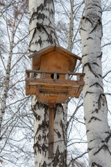 The birch house for birds and sky
