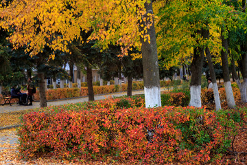 Alley of trees with yellow leaves in golden autumn. People relax on the benches in the park.