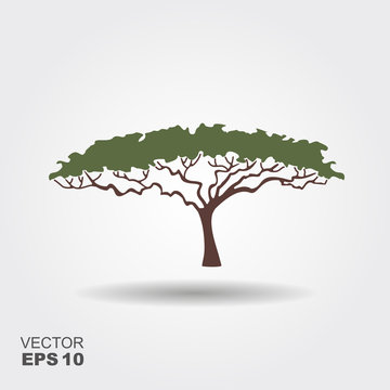 African tree icon, acacia tree silhouette. Flat ixon with shadow