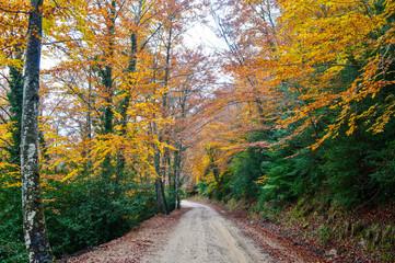 Colores de Otoño en las montañas de Luesia España