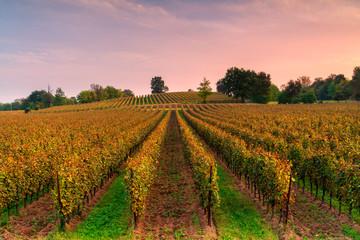 Autumn season in franciacorta, Lombardy district, Brescia province, Italy.