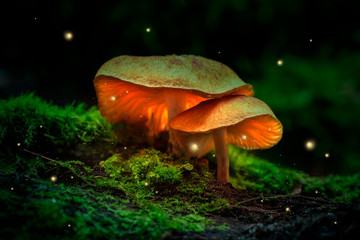 Fireflies and glowing mushrooms in a dark forest at dusk