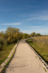 I walk by the boards of Daimiel in Castilla la mancha