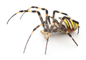 Yellow and brown spider.