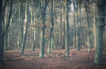 Vintage autumn forest in Amerongen with sunlight on trees.