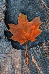 Jesienny kolorowy liść