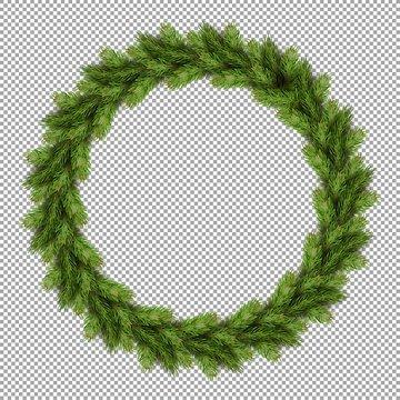 Pine tree fir spruce branch, evergreen tree twigs