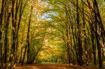 Jesienny park - Białystok