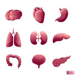 Set of icon internal organs.