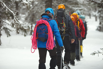Group of climbers goes on snow-covered forest in the highlands.