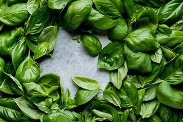 Peeking through basil leaves