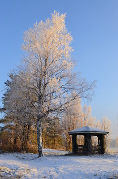 Bright autumn morning. Winter is almost here. Frost on land and trees and little cabin.