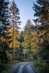 idyllic road landscape with fall colors and mood light at autumn morning in Finland.