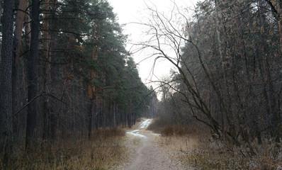 forest, tree, trees, fog, nature, landscape, autumn, mist, wood, sun, woods, pine, misty, winter, light, sunlight, park, morning, green, snow, fall, lake, road, woodland, sunset