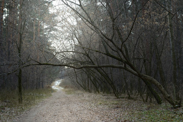 forest, tree, nature, trees, winter, landscape, road, autumn, snow, fog, path, cold, woods, wood, mist, park, spring, woodland, frost, countryside, season, white, outdoors, green, morning