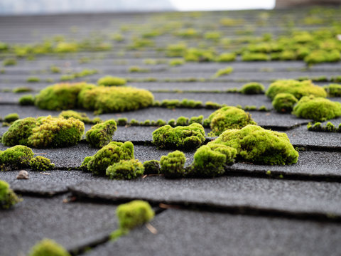 Moss on wooden panel texture background