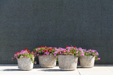 Tile Wall and Flower Pots