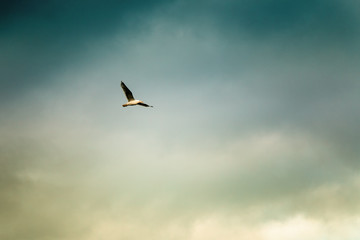 Flying Seagull on the background of a stormy Sunny sky. Toned