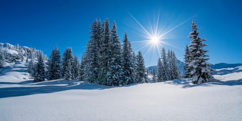 Winterpanorama - Verschneite Winterlandschaft