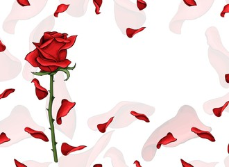 Valentine day love postcard single red rose flower and soft petals template