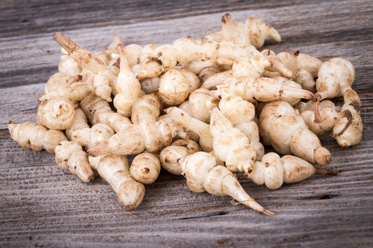 Japanese crosne Stachys affinis tubers