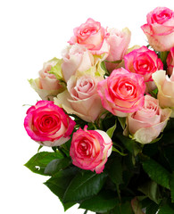 Rose fresh flowers bouquet in two shades of pink close up isolated on white background