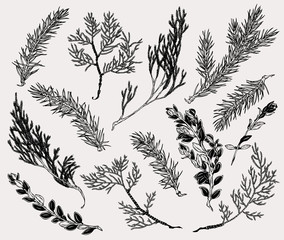 Botanical illustration of winter plants in vintage style. Hand drawn collection of decoration element for cards, poster, invitation, prints.