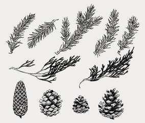 Botanical illustration of winter plants and cones in vintage style. Hand drawn collection of decoration element for cards, poster, invitation, prints.