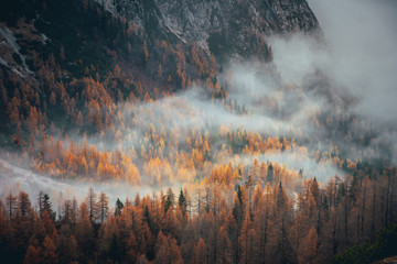 Mist in autumn orange forest. Alps mountains
