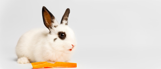 Rabbit and Carrot. White Rabbit On White Background With Copy Space