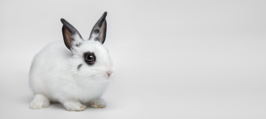 Little dwarf white rabbit sitting on white background