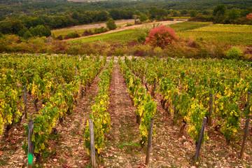 Vignes de Saint-Aubin en Bourgogne-Franche-Conté