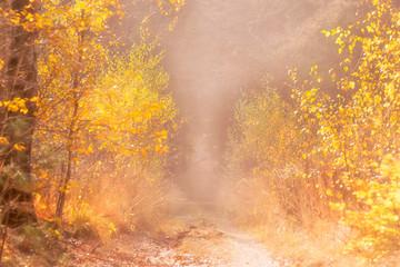 Papiers peints Forets autumn background