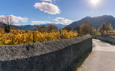 Wall Mural - golden vineyard and grapevine country landscape with a view of mountains and valley and an old traditional rock wall and road in foreground